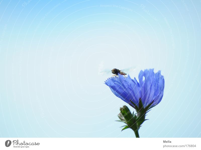 Nature Flower Blue Plant Summer Calm Animal Meadow Blossom Contentment Moody Field Fly Environment Flying Sit