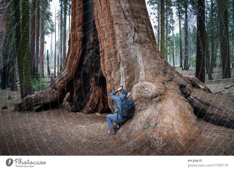 live on solid ground Take a photo Vacation & Travel Tourism Man Adults 1 Human being Nature Landscape Plant Tree Redwood Tree trunk Forest Sequoia National Park