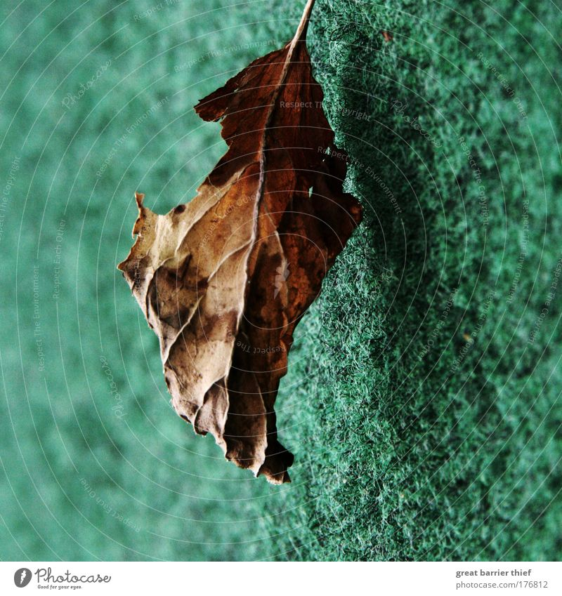 Nature Green Summer Calm Leaf Relaxation Wood Warmth Moody Brown Wait Flying Hope Esthetic To fall Derelict