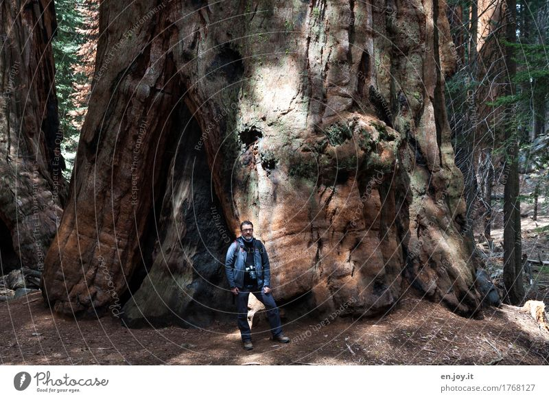 who are we... Take a photo Vacation & Travel Tourism Adventure Man Adults 1 Human being 30 - 45 years 45 - 60 years Nature Landscape Plant Tree Redwood