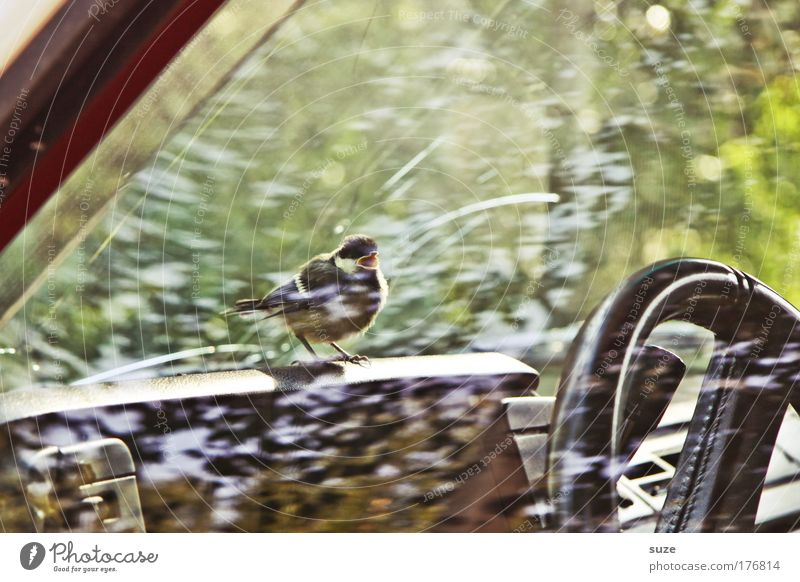 Nature Animal Environment Car Window Small Bird Fear Car Transport Sit Wild animal Wait Cute Vehicle Scream Captured