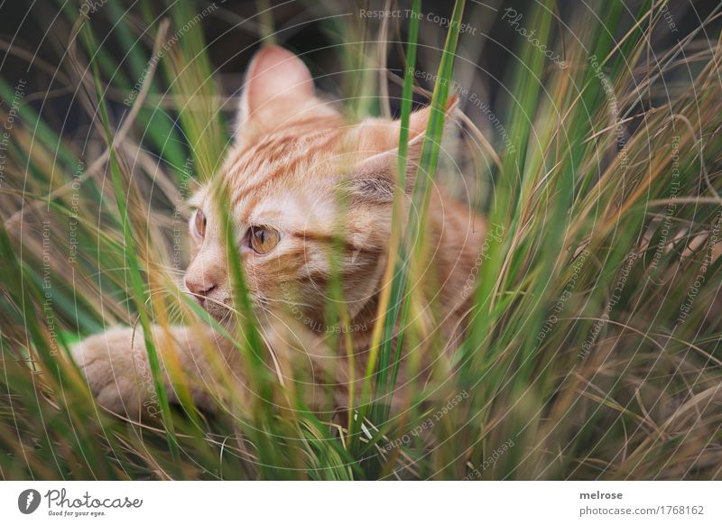 Cat Nature Plant Summer Green Animal Baby animal Grass Small Brown Field Lie Observe Beautiful weather Cute Discover