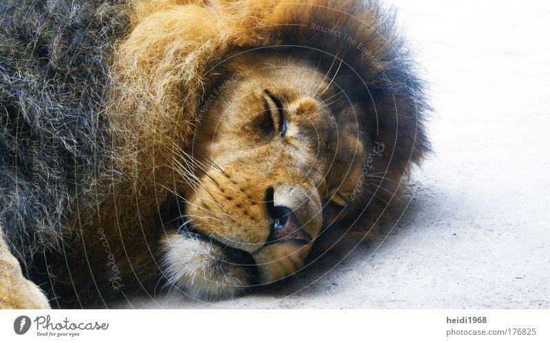 Animal Sleep Zoo Fatigue Wild animal Closed eyes