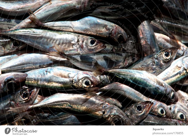fish market Colour photo Close-up Deserted Food Fish Seafood Nutrition Dinner Banquet Slow food Fishing (Angle) Ocean Trade Gastronomy Animal Flock Esthetic