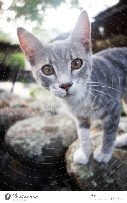 Corsican kitten Animal Cat Animal face 1 Baby animal Looking Small Curiosity Cute Gray Interest Colour photo Exterior shot Close-up Deserted Day Light Contrast