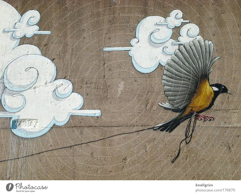 Fly! Colour photo Exterior shot Deserted Copy Space top Copy Space bottom Clouds Animal Bird 1 String Concrete To hold on Flying Brown Yellow Gray Black White