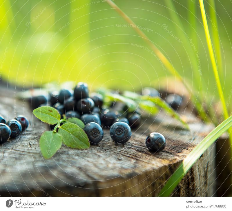 blueberries Food Fruit Dessert Nutrition Eating Picnic Organic produce Vegetarian diet Joy Healthy Alternative medicine Healthy Eating Hiking Summer Plant Tree