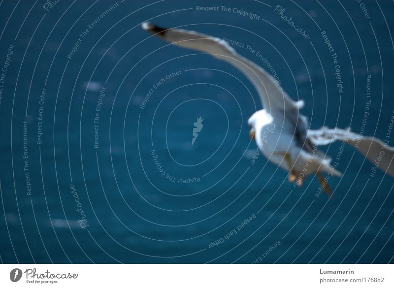 nosedive Landscape Air Water Summer Beautiful weather Wind Ocean Animal Wild animal Bird 1 Flying Free Fresh Infinity Above Blue White Moody