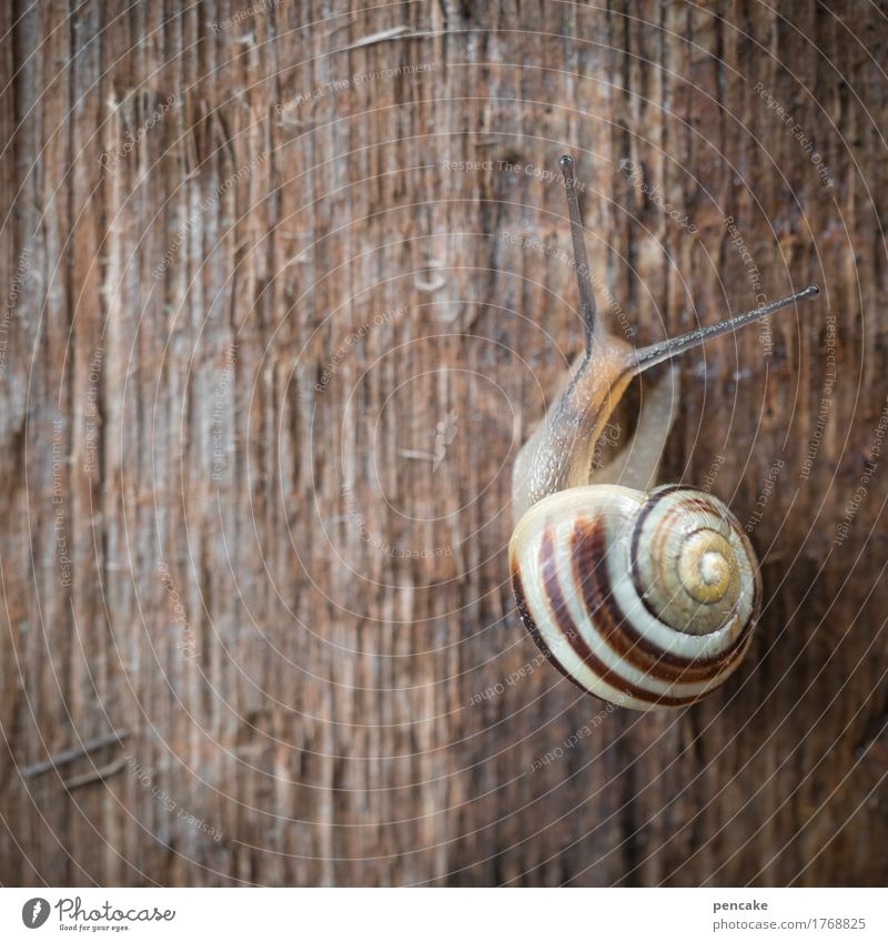 Animal Natural Wood Authentic Wait Sign Snail 6 Slowly Snail shell