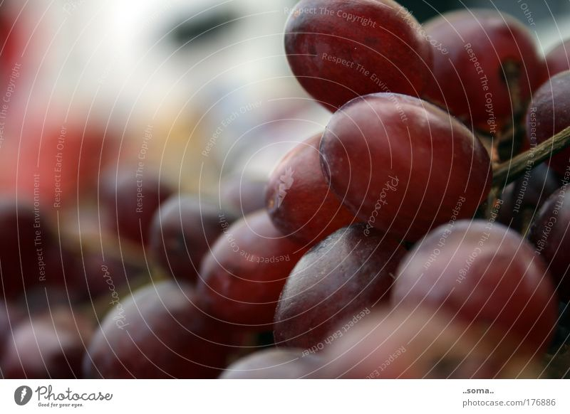 grapes Colour photo Exterior shot Food Fruit Bunch of grapes Nutrition Vegetarian diet Finger food Healthy Feeding To enjoy Fresh Good Natural Juicy Sweet