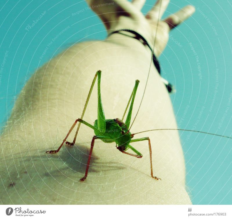 Hand Skin Arm Perspective Insect Mobility Surprise Competition Encounter Locust Animal Dryland grasshopper