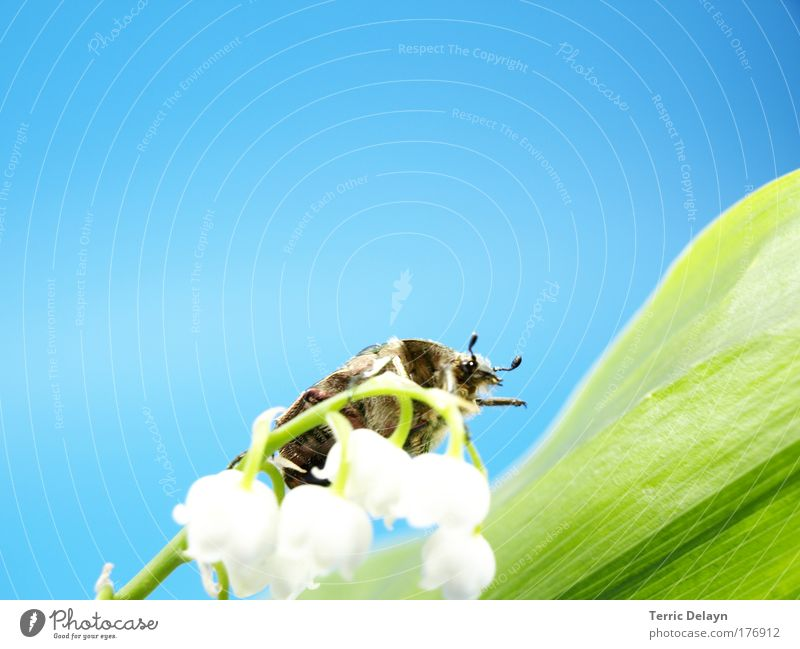 Nature White Flower Green Blue Plant Animal Yellow Blossom Movement Spring Brown Walking Environment Insect Observe