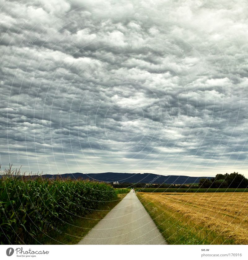 Nature Sky Green Summer Calm Loneliness Yellow Gray Sadness Landscape Air Moody Field Environment Esthetic Authentic