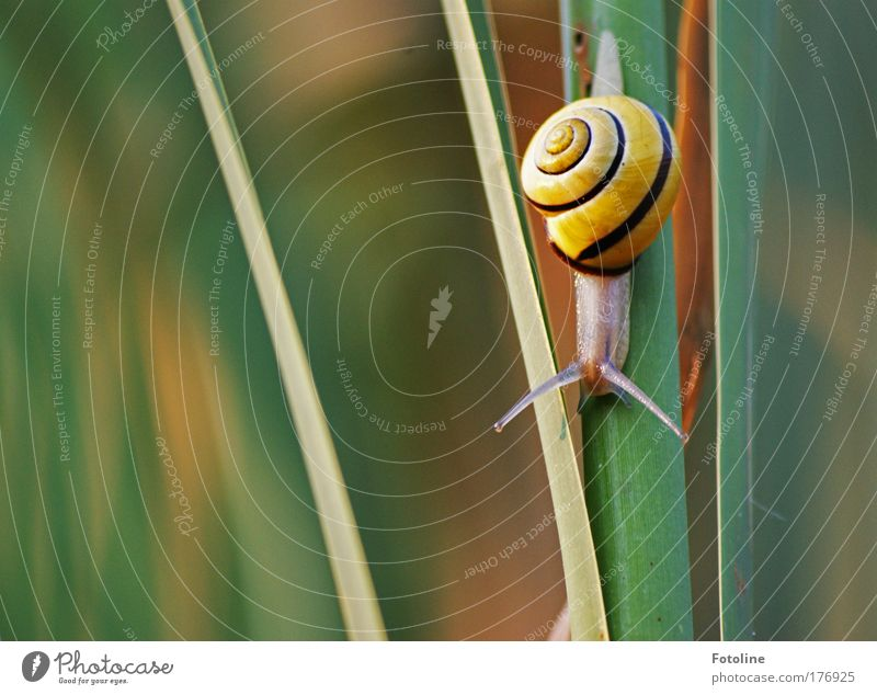 Nature Plant Animal Meadow Grass Park Bright Field Small Environment Wild animal Snail Feeler Crawl Slimy Snail shell