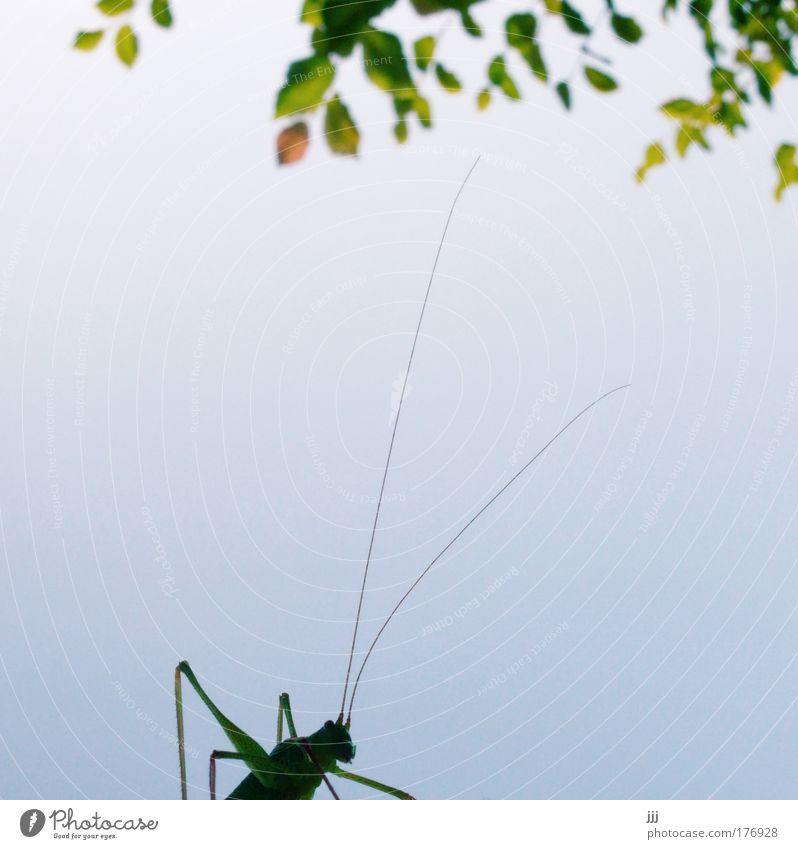 Hops under the hazel bush Copy Space left Copy Space middle Environment Nature Plant Animal Tree Leaf Insect Locust Green