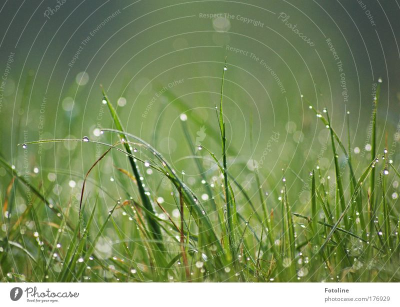 Nature Green Plant Summer Meadow Grass Spring Park Landscape Bright Environment Wet Drop Morning Structures and shapes Water