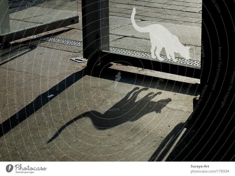 White City Joy Black Far-off places Life Emotions Gray Building Cat Door Time Going Glass Esthetic Dangerous