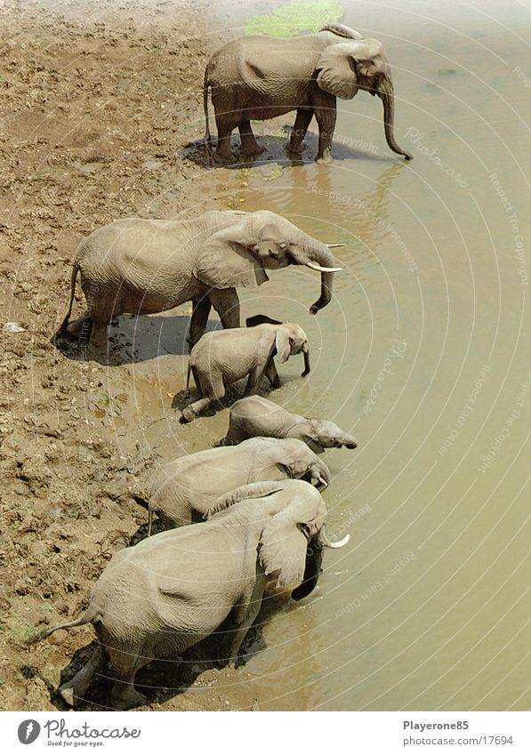 Water Africa Elephant