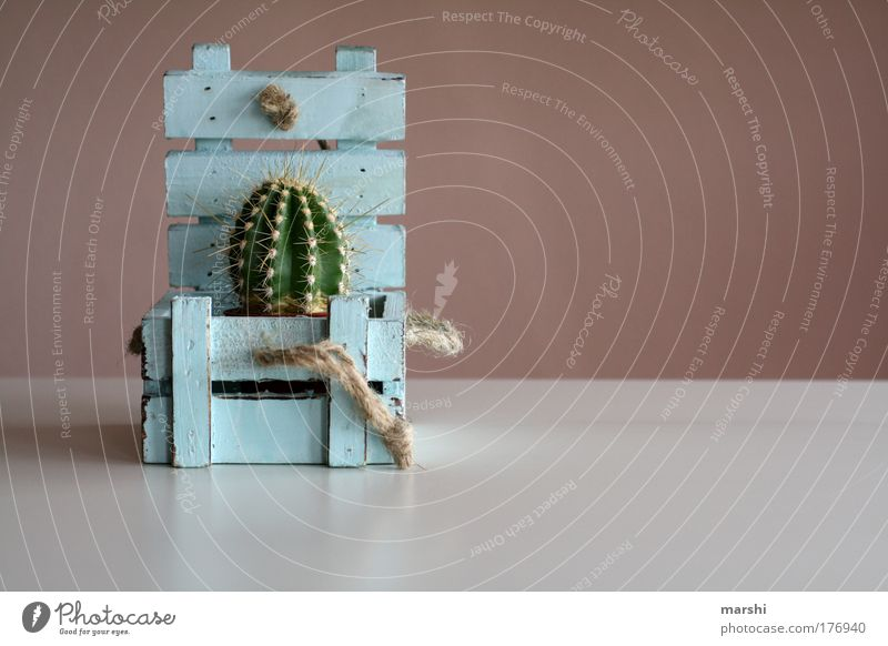 amazing* surprise Colour photo Interior shot Copy Space right Nature Plant Cactus Box Wood Old Blue Green Chest String Thorn Pierce Gift Containers and vessels