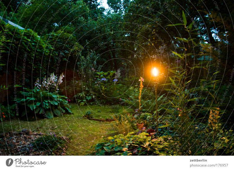 Flower Plant Summer Garden Night Moss Flame Fairy tale Horticulture Garden Bed (Horticulture) Torch Summer evening Summer night