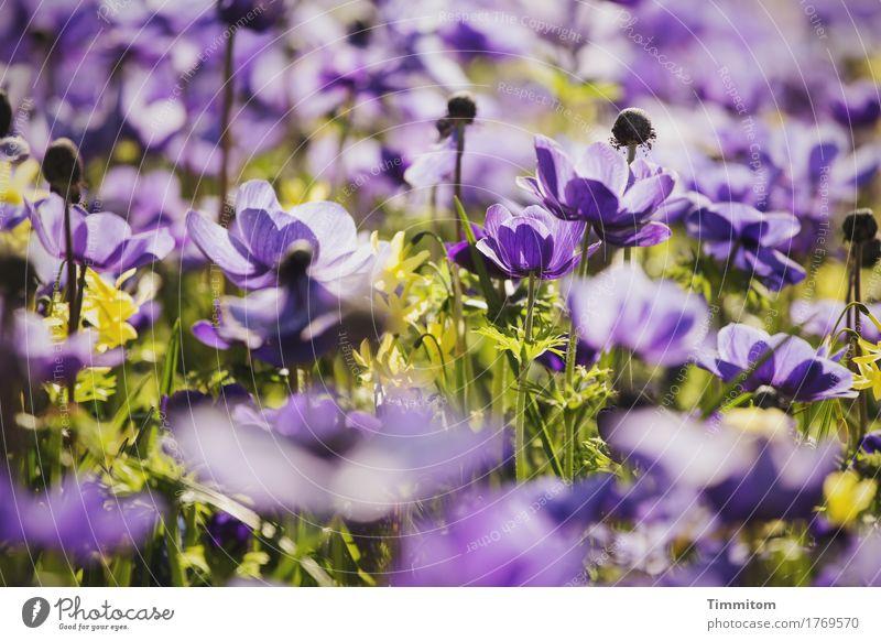 Nature Plant Green Flower Blossom Emotions Natural Blossoming Violet Flowerbed