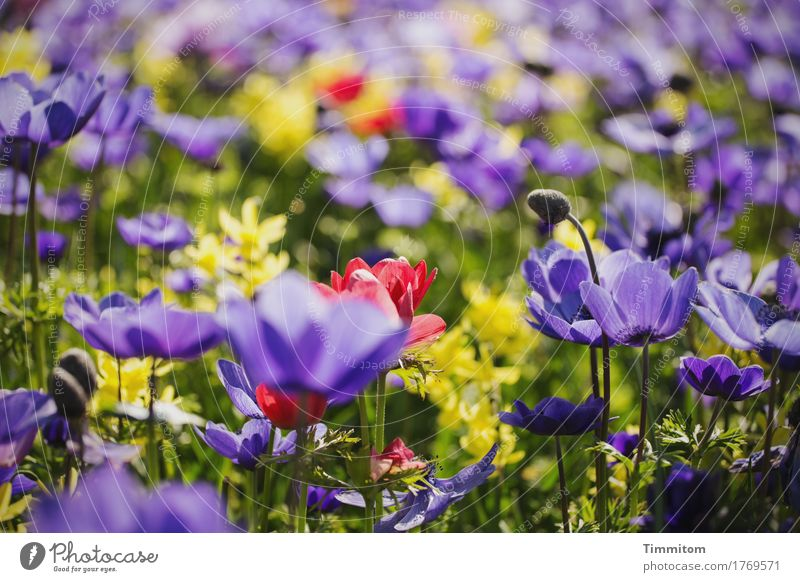A few flowers (2). Nature Plant Flower Leaf Blossom Bud Blossoming Yellow Green Violet Red Multicoloured Colour photo Exterior shot Deserted Day
