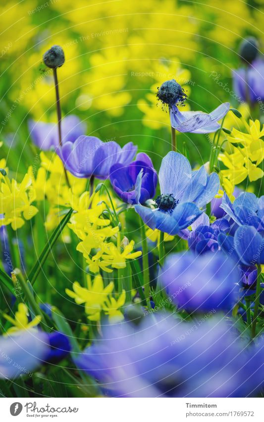 But also to see the colours. Environment Nature Plant Flower Leaf Blossom Blossoming Esthetic Natural Blue Yellow Green Colour photo Exterior shot Deserted Day
