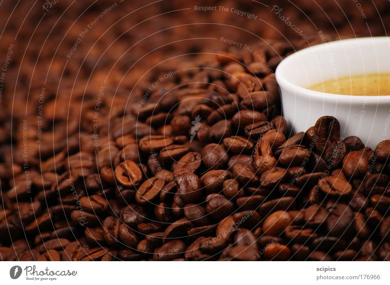 Coffee Colour photo Interior shot Studio shot Detail Artificial light Blur Food Nutrition To have a coffee Beverage Hot drink Latte macchiato Espresso Cup