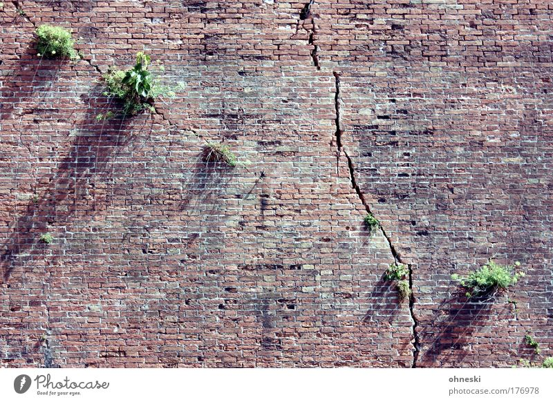 Nature Old Tree Plant Wall (building) Stone Wall (barrier) Growth Manmade structures Italy Brick Crack & Rip & Tear Old town Tuscany Abstract