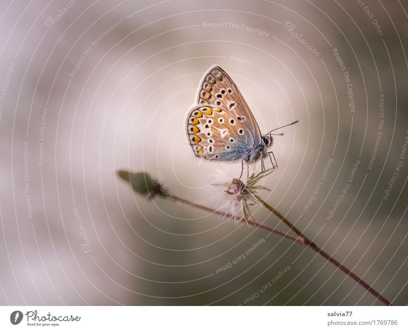 Nature Plant Blue Summer Animal Calm Environment Gray Brown Fog Wild animal Esthetic Perspective Wait Wing Uniqueness