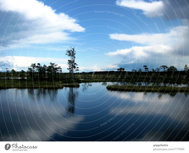 Nature Water Sky Blue Plant Calm Clouds Far-off places Relaxation Freedom Happy Dream Lake Landscape Air Contentment