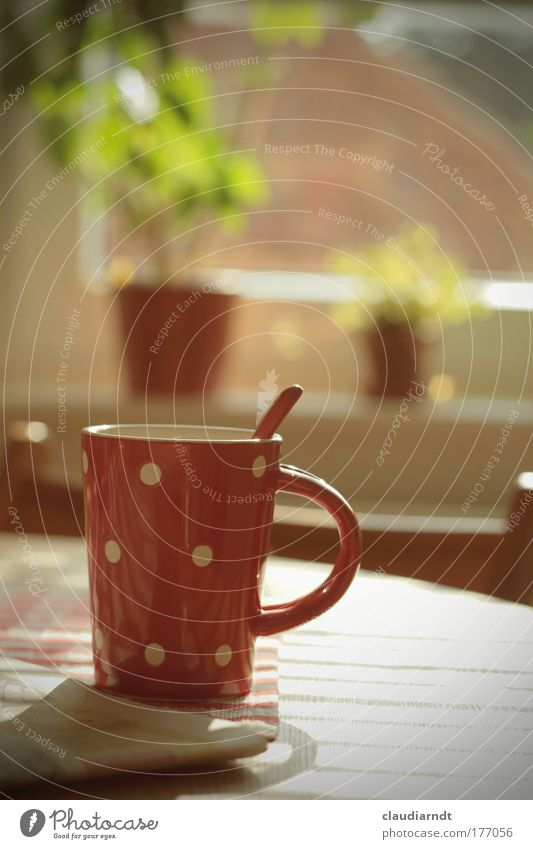 Plant Red Calm Relaxation Window Happy Contentment Flat (apartment) Food Table Beverage Coffee Break Kitchen Drinking