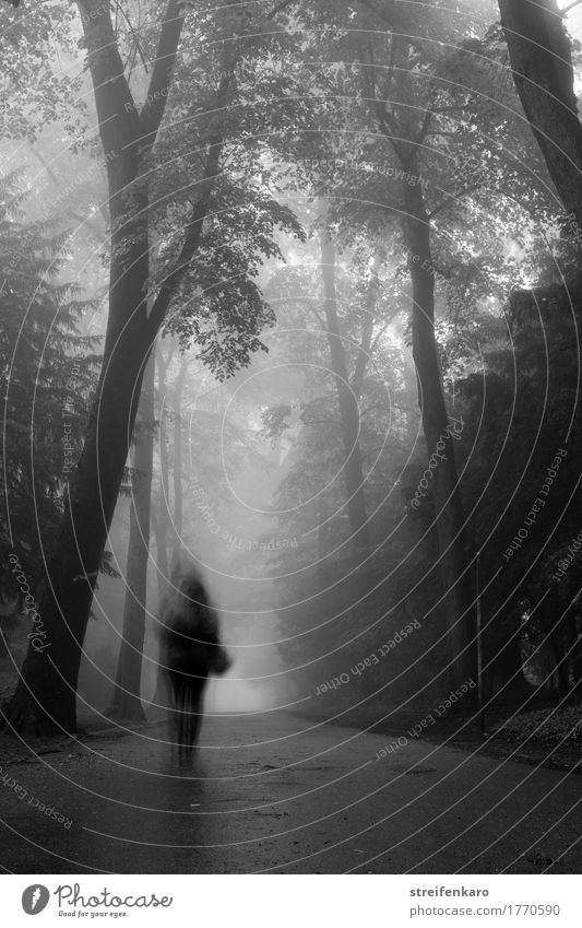 The blurred figure of the walker disappears in the dense fog between trees in autumn Human being Feminine Young woman 1 30 - 45 years Adults Autumn Fog Park