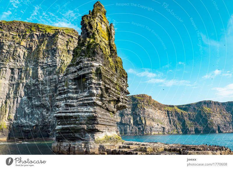 Branaunmore Nature Landscape Sky Beautiful weather Rock Mountain Cliffs of Moher Coast Ocean Island Ireland Bird Flock Gigantic Tall Blue Brown Green White