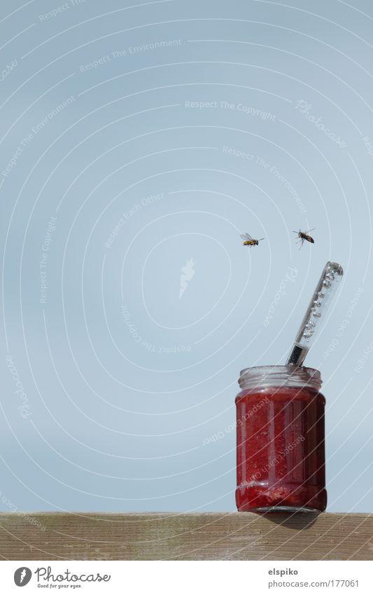 Sky Blue Glass Threat Feeding Spoon Pierce Wasps Jam Plagues Jam jar