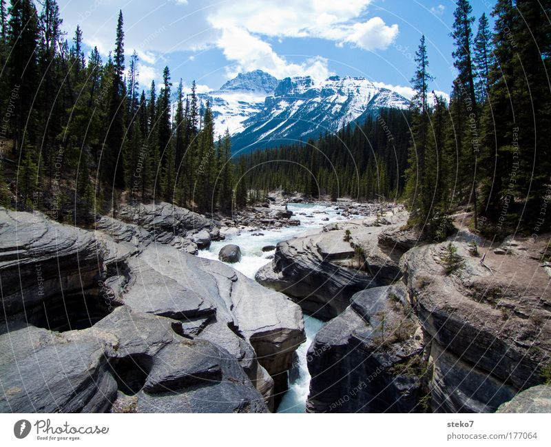Nature Summer Loneliness Forest Relaxation Mountain Landscape Rock Large River Idyll Peak Beautiful weather Canada Canyon Snowcapped peak