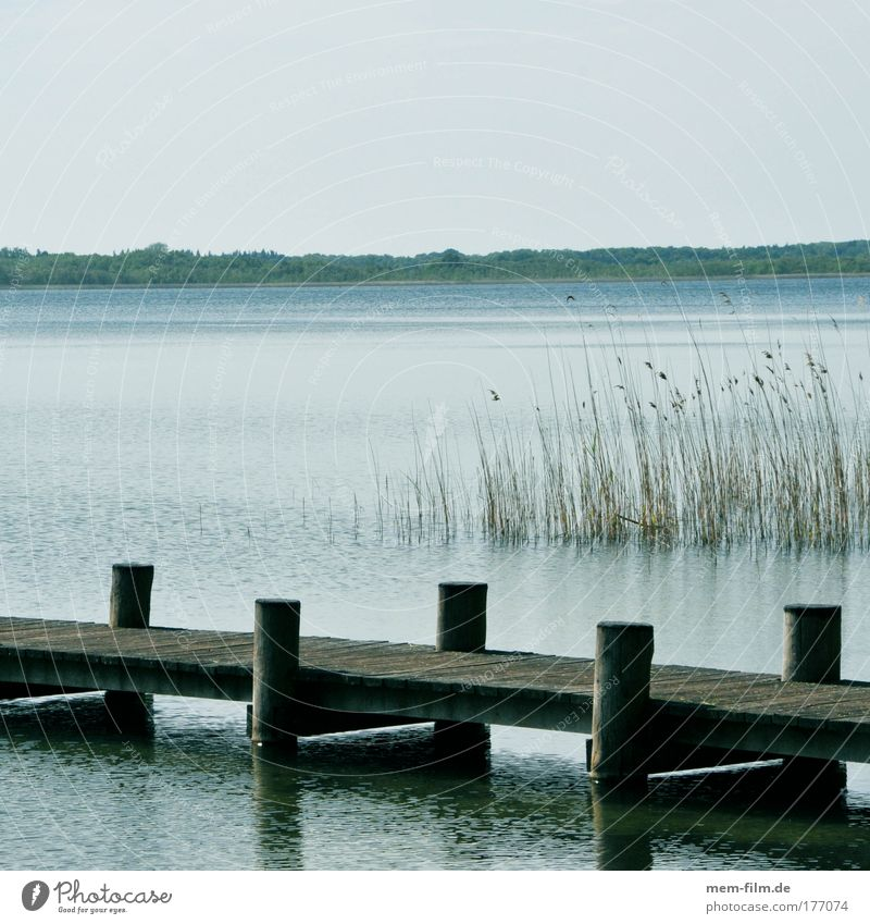 rest Lake Footbridge Calm Water Common Reed standard Fishing (Angle) Müritz Vacation & Travel Germany Relaxation Peace Stress