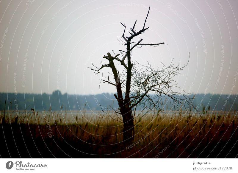 Nature Tree Plant Calm Loneliness Dark Meadow Death Grass Lake Landscape Moody Coast Environment Growth Romance