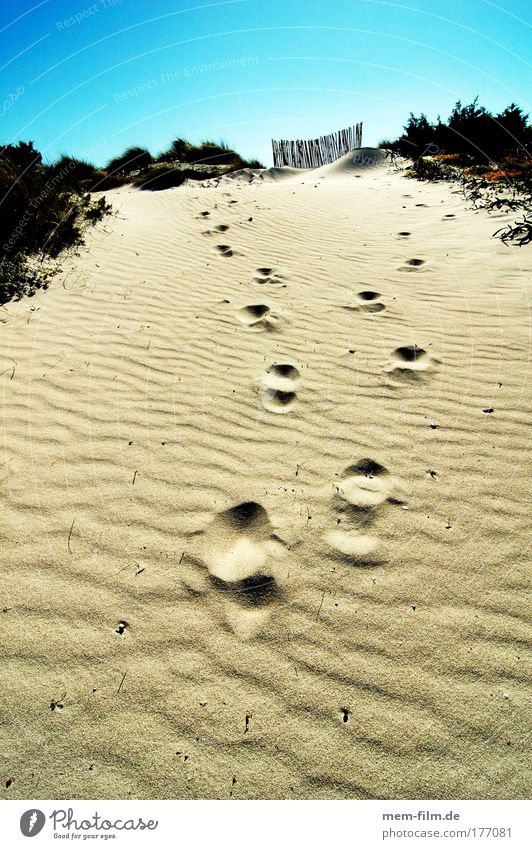 tracks es trenc Majorca stage Sand Vacation & Travel Beach footprint Dry Drought Hot Incandescent Perspire To dry up Summer hill  Holidays & Holiday & Travel