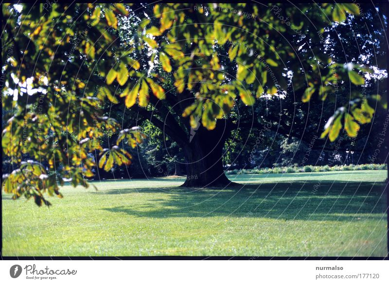 Nature Tree Plant Sun Vacation & Travel Summer Leaf Calm Meadow Environment Landscape Playing Freedom Wood Grass Garden