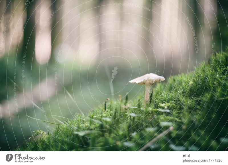 Mushroom 2 Environment Nature Landscape Plant Beautiful weather Forest Growth Brown Green search for mushrooms Mushroom picker Moss Woodground Colour photo