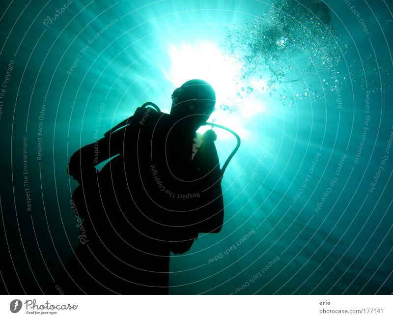 ... Colour photo Underwater photo Day Back-light Aquatics Dive Water Sunlight Ocean Blue