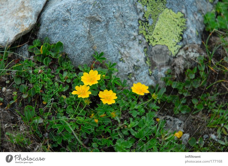 Nature Beautiful Flower Green Plant Summer Yellow Colour Relaxation Blossom Happy Gray Landscape Environment Rock Natural