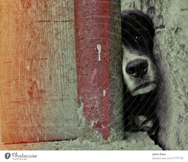Free Muzzle Subdued colour Animal portrait Village Wall (barrier) Wall (building) Backyard Courtyard Pet Dog Animal face 1 Observe Wait Cuddly Curiosity Cute