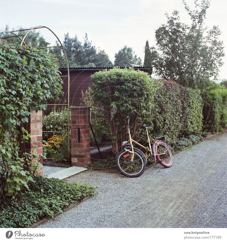 Nature Vacation & Travel Green Plant Joy Relaxation Garden Natural Leisure and hobbies Beautiful weather Bushes Gloomy Retro Bicycle Save Garden plot