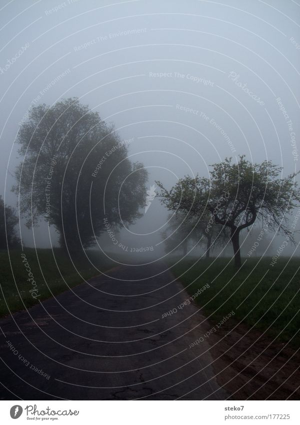 Tree Street Dark Lanes & trails Landscape Field Fog