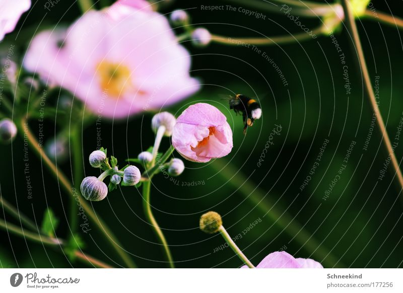 Nature Flower Plant Summer Calm Animal Meadow Blossom Landscape Environment Flying Esthetic Wing Natural Idyll