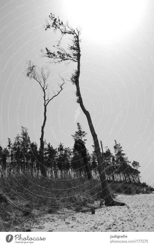 Nature Tree Ocean Plant Beach Calm Forest Dark Landscape Moody Coast Environment Beach dune Baltic Sea Darss Western Beach