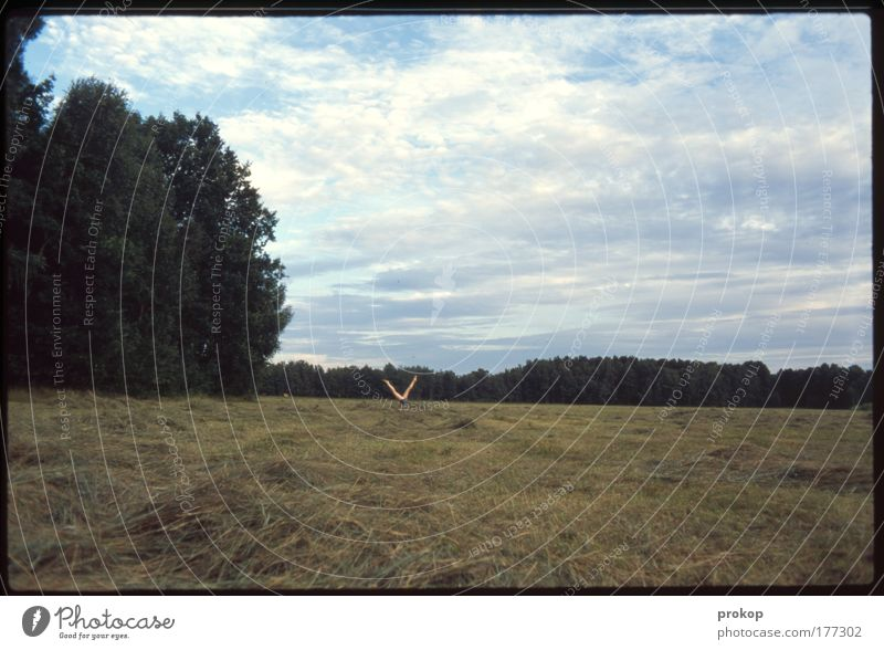 Heck the what...? Colour photo Exterior shot Day Wide angle Human being Legs Environment Nature Landscape Plant Sky Clouds Summer Beautiful weather Tree Grass