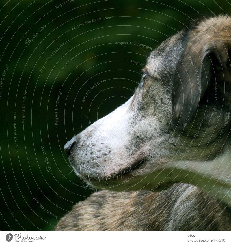 Dog Nature Beautiful Green White Calm Animal Environment Dream Brown Wait Pelt Animal face Pet Harmonious Smart